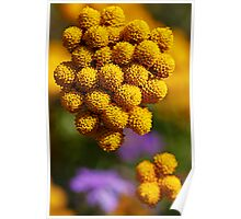 round yellow flowers Poster