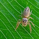 Little Spider by Rick Playle