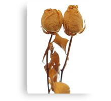 couple of old beautiful roses in love Canvas Print