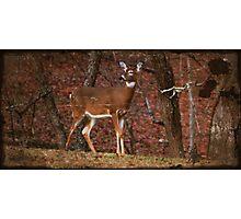 Deer Alert Photographic Print