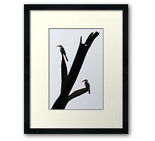 Resting Hornbills Framed Print