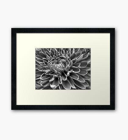 Monotone Macro Mum Bloom Framed Print