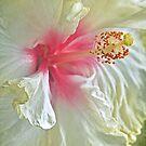 Blushing bride by IngeHG