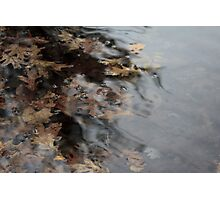 Inky Leaves Photographic Print
