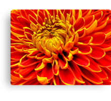 Color Mum Bloom - Macro Canvas Print