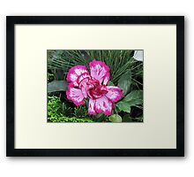 Giant Dream in Pink and White Framed Print