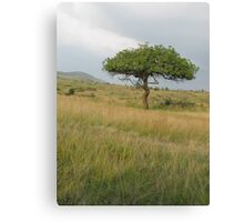 Kenyan Landscape Canvas Print