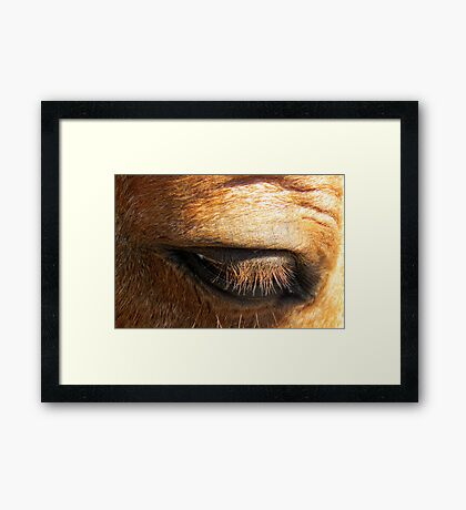 What a Beautiful Eye You Have... Framed Print