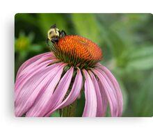 Bee on Echinacea Metal Print