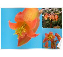 Cactus Flower - Triptych - Macro Poster