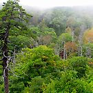 Blue Ridge Autumn 2009 by Frank Bibbins
