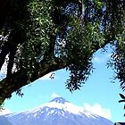Volcano Villarica with tree, Chile by Camila Gelber