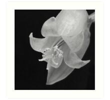 Cactus Flower - Macro Art Print