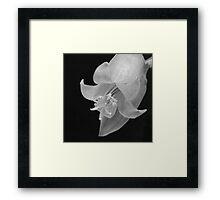 Cactus Flower - Macro Framed Print