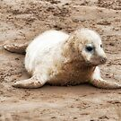 Donna Nook Seal Pup by cameraimagery