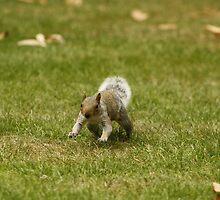 Charging Squirrel by MidnightShadow