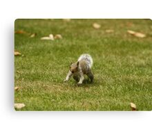 Charging Squirrel Canvas Print