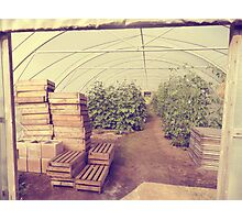 beans & crates Photographic Print