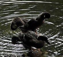 Ducks by Abigail Langridge