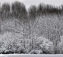First Snow by Diane E. Berry