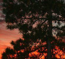 Sunset over Lake Powhatan by MLRutledge