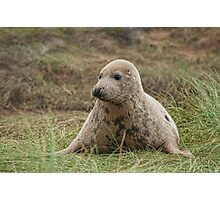 Donna Nook Seal Photographic Print