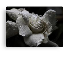 White Gardenia In The Rain Canvas Print