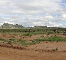Samburu land scape by sharkyvin