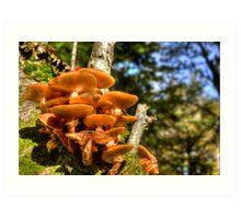 Fungal Bloom Art Print