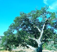 Old Tree in Blackstar Canyon by Christine Chase Cooper