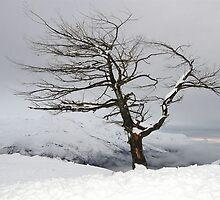 NZ Tree by Gary Lande