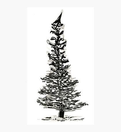 evergreen (haiga X) Photographic Print