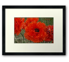 Double Poppies Framed Print