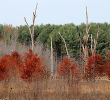 Red Tree, Dead Tree, Green Tree by Ursula Lawrence