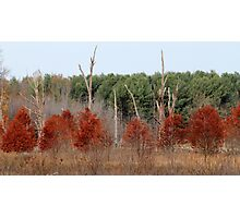 Red Tree, Dead Tree, Green Tree Photographic Print