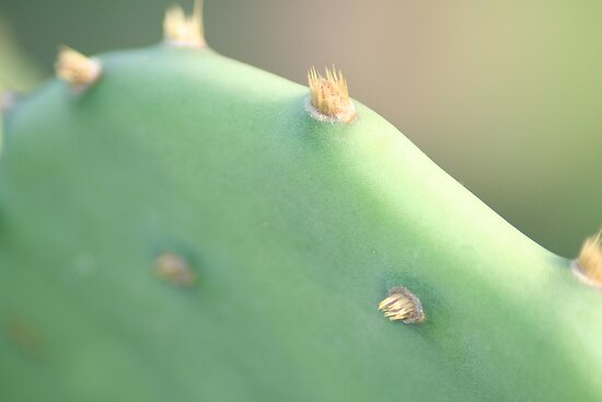 Pricklypear by Louise Green