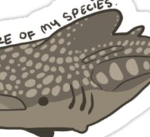 Unsure Whale Shark Sticker