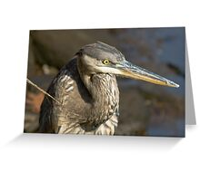 Portrait of a Great Blue Heron Greeting Card