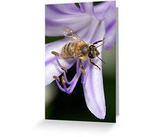 Bizzy Bee Greeting Card