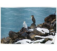Cormorant and Gull Poster