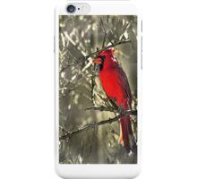 Male Cardinal iPhone Case iPhone Case/Skin