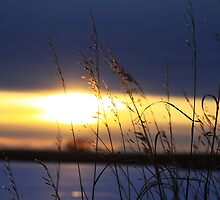 Grassy Sunset by Alyce Taylor