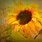 Autumn Sunflower and Bee by Tracy Riddell