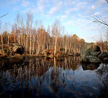 Rock and Birch and Water by Phil Vriend