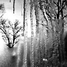 Tears and Trees by christiane
