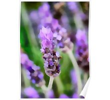 Lavender Blue Dilly Dilly Poster