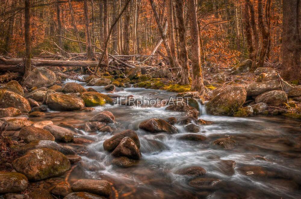 Deep In The Forest by JHRphotoART