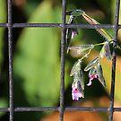 Caged Wild Flower by Rosalie Scanlon