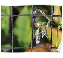 Caged Wild Flower Poster