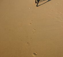 Pawprints in the Sand by Laura Sykes